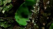 """Дървото на мъченията (""""Без багаж"""" еп.43 трейлър)"""