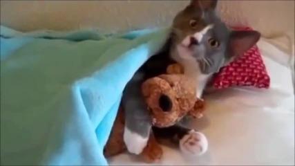 Забавна Компилация с Котки
