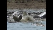 Animal Planet - Диви и хищни - Смъртоносната захапка на крокодила