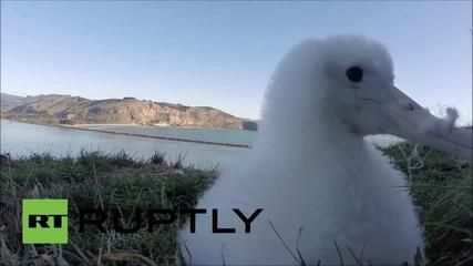 Любопитен Албатрос и GoPro камера