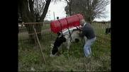Кравите Са Опасни За Озоновия Слой