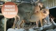 Изложба в Русия на животни, които правят секс