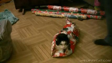 Мъж опакова котката си като коледен подарък !!