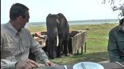 Слон се разбива в туристи в Зимбабве