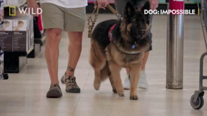 Повече социализация | Невъзможни кучета | NG Wild Bulgaria