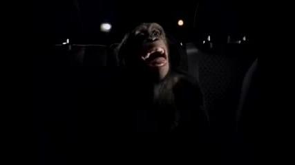 Реклама - Маймуна Защитава Собственичката Си