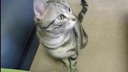 Котка с красиви шарки