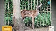 В старозагорския зоопарк се родиха 2 козирога, лама, елен и 7 птици ему
