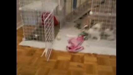 Зайче си играе :)
