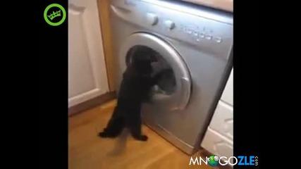 Коте пере дрехи
