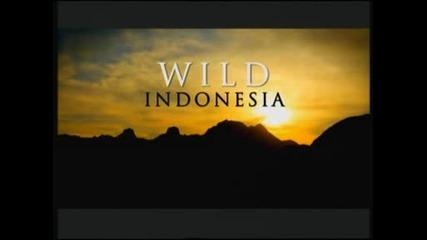 Дивата Индонезия - Изгубеният свят на Папуа