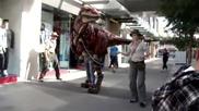 Utahraptor по улиците на Австралия