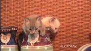 4 котенца сладури