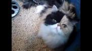 Котка Гушка Малки Пиленца