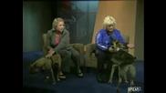 Кучета Атакуват Репортерки - Смях