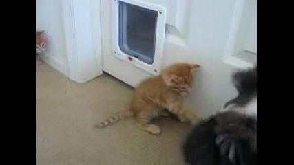 Най-сладките котенца:):)