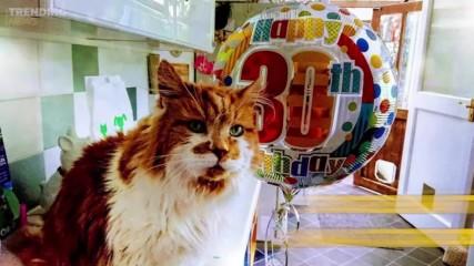 Запознайте се с Ръбъл – най-старата котка в света