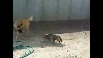 Коте срешу Куче (смях)