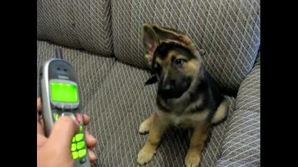 Куче слуша с интерес мелодиите на телефона