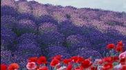 """Богатството от билки на България! ... ... ( """" Върху бели криле"""" - вокал Нели Андреева) ... ..."""