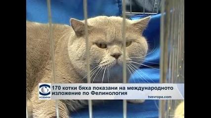 170 котки бяха показани на изложение в музея Земята и хората