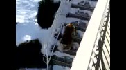 Куче В Снега
