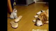 Малко котенце взема акъла на куче