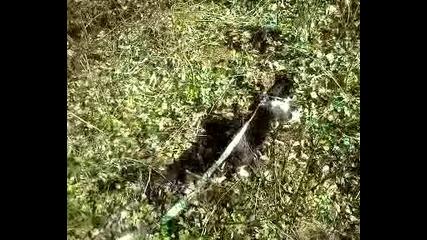 котка на каишка