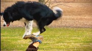 Най-забавното и умно куче, прави трикове ( Nana the Wonder Dog )