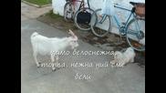 * Subs - Мими Иванова - Вълкът И Седемте Козлета (remix)