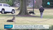 Изгониха кучетата на Байдън от Белия дом, били агресивни