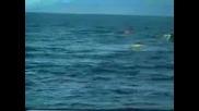 Косатка искача от океана ! Ужас!