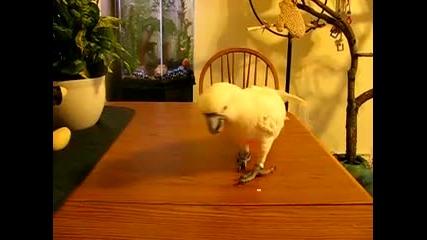 Папагал си играе с лазер