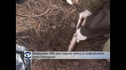 Залесяват 500 декара горска площ в софийското село Локорско