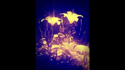 White Lilies - Peder (feat. Anne Trolle)