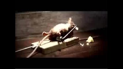 Яще сирене бъдете силни мишки ...