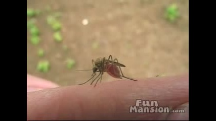 Какво Прави Шашав Комар За 2 Мин.
