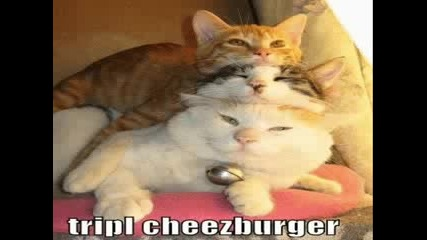Много Сладки Котки