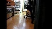 Котката Нинджа