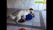 куче се опитва да изнасили бабка