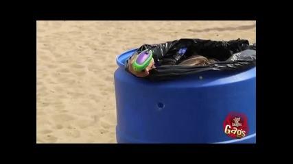 Скункс на плажа (скрита камера)