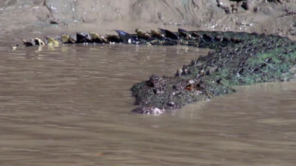 Видове крокодили, които напрадат без да бъдат провокирани | Croctober | NG WILD