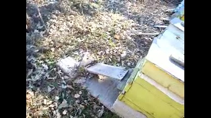 Пчелина на Гьоргов