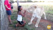 Животните са страхотни 2013