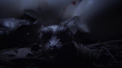 Животът на новоизлюпените крокодили | Croctober | NG WILD