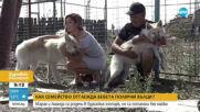 Семейство отглежда бебета полярни вълци