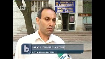 Арестуваха мъж, застрелял котарак в Перник, ядял гълъбите му