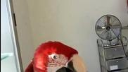 Много ядосан папагал ръмжи като куче