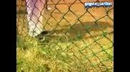 Sean Paul Ft. Jigzagula & Farenheit - Hit Dem Intro