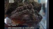 Най смъртоносните в океана - Bg subs част 1/2